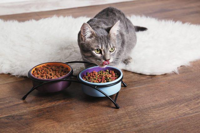 croquettes naturelles pour chat